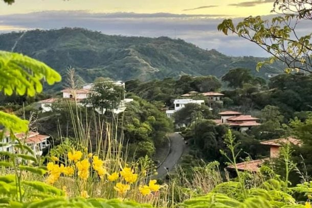 View through yellow flowers and ferns of town buildings and roads below with mountains in the background in Costa Rica