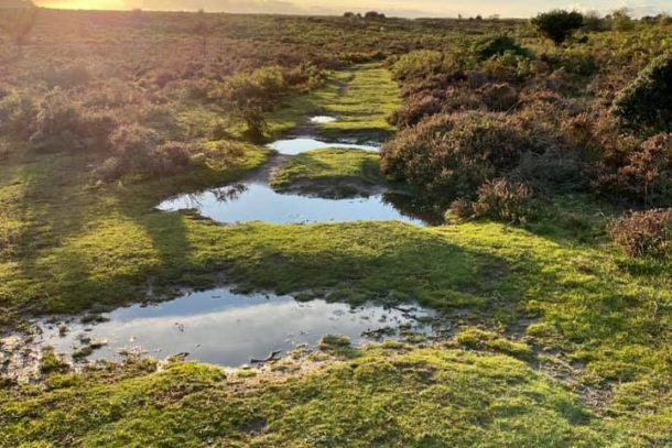Beautiful reflective ponds in wild and natural landscape at the New Forest National Park, England, United Kingdom