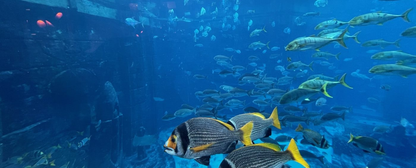 Amazing view of the aquarium from inside our underwater suite in Atlantis