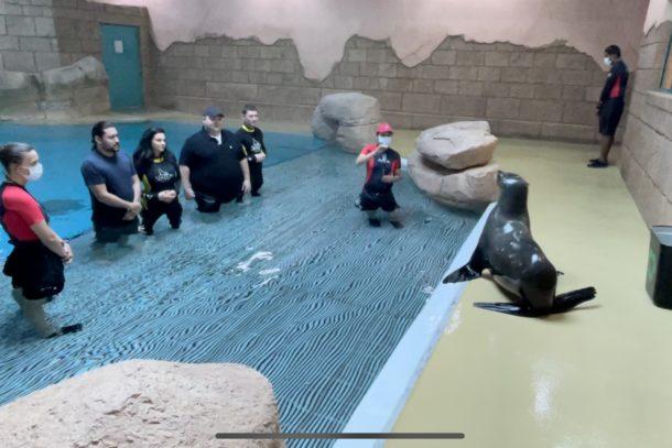 Super fun sea lion encounter at the Atlantis resort