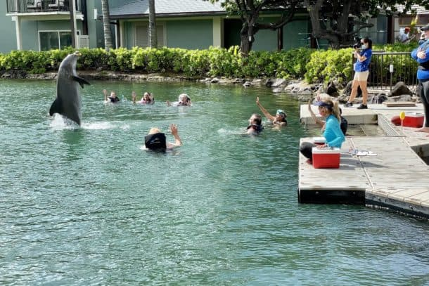 A dolphin does a trick with people watching from the water and the dock